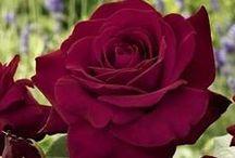 Burgundy/Deep Reds!