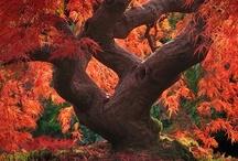 Beauty of Nature / by Deborah Kozak