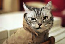 Cat : Photo / 고양이는 우월하다