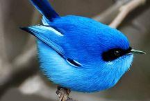 Bird : Photo
