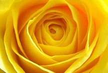 Color : Yellow