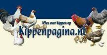 Kippenpagina.nl - Hens and Roosters / www.kippenpagina.nl -  www.wyandotte.nl