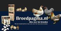 Chicken Breeding - Broedpagina.nl / Alles over broeden in het algemeen. www.broedpagina.nl