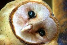 Owls - Uilen / Owls - Uilen - www.dierenplaza.nl