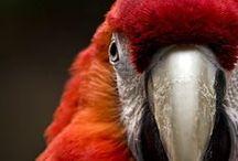 Papegaaien - Parrots / Papegaaien & Parrots