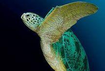 Ocean Wildlife / www.dierenplaza.nl