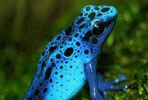 Frogs - Kikkers / www.dierenplaza.nl