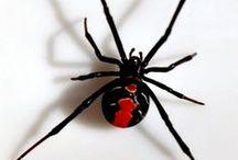 Spiders - Spinnen / www.dierenplaza.nl