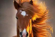 Horses - Paarden / Horses - Paarden www.dierenplaza.nl
