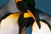Antarctic - Antartica / Antarctic - Antartica http://www.dierenplaza.nl