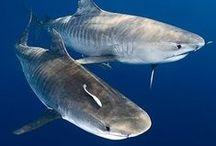 Sharks - Haaien / Sharks - Haaien www.dierenplaza.nl