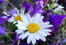 Suomen kukat