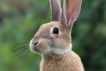 Rabbits - Konijnen - Bunny's / Rabbits - Konijnen - Bunny's