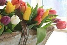 Flores y Jardines / by Luisa Elena Silvio