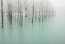 Winter / by Eva