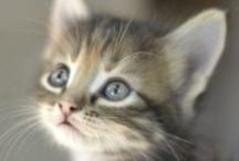 Kittens / This board is all about kittens, cute kittens everywhere!