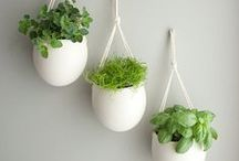 Gardening DIY / Some images to inspire the gardener in you!