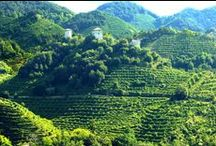THE TERROIR / A masterpiece of History & Nature