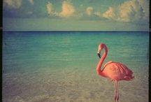 Flamingo Fun / by CarLee Dane