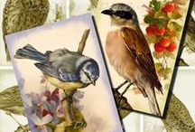 Birds, Birds, Birds / Bird illustrations and collage sheets