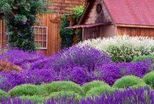 Beautiful Nature / Images about nature - plants, animals, landscapes