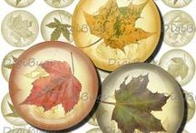 Autumn Collages / Digital Collage Sheets with Autumn Colors