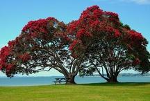 NZ Trees