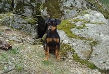 Kali (My Dog)