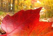 Leaf Love / Beautiful leaves
