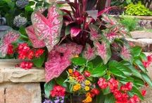 Gardens and Flowers / Gardening and beautiful flowers