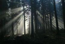 """Forests / """"Lesy, hluboké lesy, kde neslyšíme lidské hlesy.."""" (""""Forests, deep forest, where we do not hear human voices.."""")"""