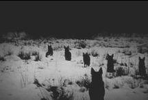 "Wolves / ""Zavoláš li vlka, pozveš celou smečku."" krásné co?:) (""If you call the wolf, you invite the whole pack."")  Nice huh?:)"