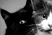 cats / cats - divine creatures