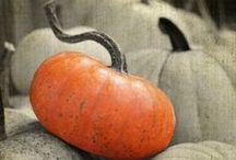 It's All About Pumpkins / Pumpkins and Pumpkin recipes we love