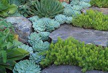 Idéer för trädgård
