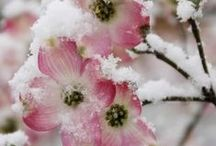 SEASONAL BEAUTY / Every season has its own special beauty...