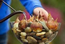 Gardening / Gardening, Permaculture, Biodynamic, Etc....