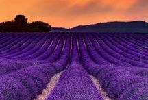 The Beauty of Provence / Inspiration whilst cooking in a Provençal style.