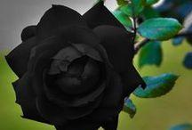 Dark Garden / Finding beauty in the dark
