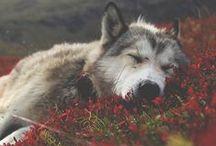 Fauna / Lovely animals <3