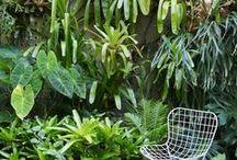 Garden / Garden