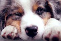 Love on four legs