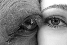 Horses / by Cacy Ferraz