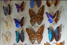 May Natural History Museum
