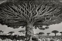 Tree Love / Trees bring me JOY.