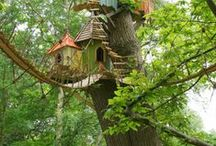 Living in a Tree / Living in trees...