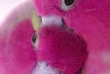 Pink Is Everything! / All things PINK. Never was a pink person until recently...