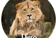 P Is for Pitta / Tips for cooling and balancing Pitta dosha.