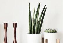 INTERIOR / plants