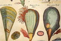Vintage Prints- non botanical